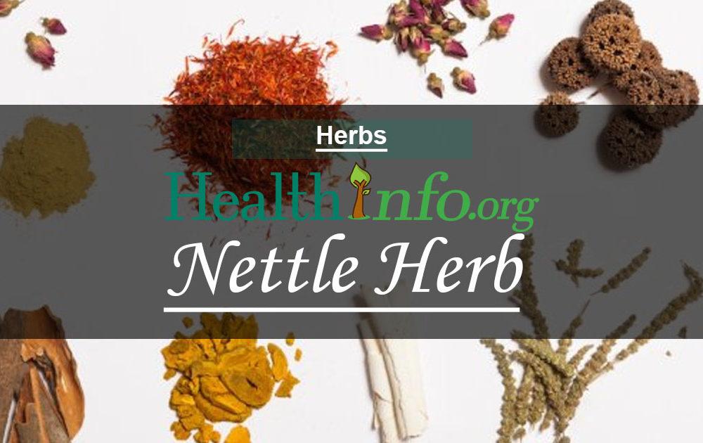 Nettle Herb – Stinging Nettle