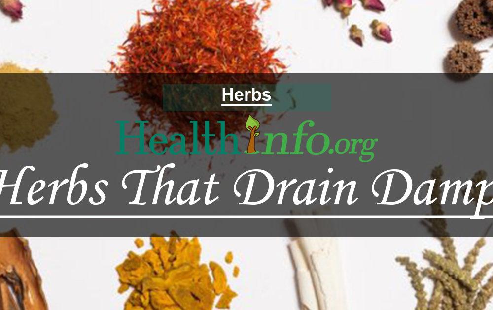 Herbs That Drain Damp