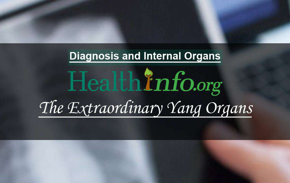 The Extraordinary Yang Organs