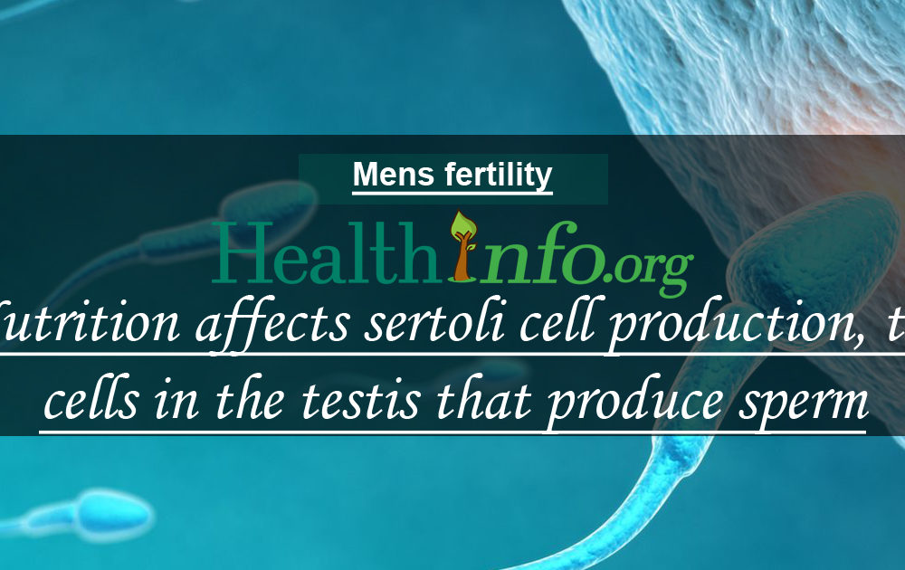 Nutrition affects sertoli cell production, the cells in the testis that produce sperm