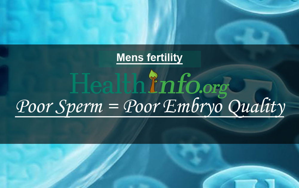 Poor Sperm = Poor Embryo Quality